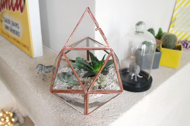 terrarium,kit terrarium,les fleurs de mars